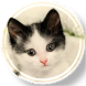 Cute Cats Wallpapers by Wallpapers MelNej Apps