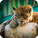 Jaguar Animal Wallpaper by Empire Wallpapers