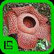 Flora Provinsi Indonesia by Isnaini