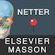 Mémofiches Anatomie Netter by Elsevier Masson SAS