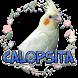 Calopsita cantando by Raja Burung App