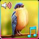 Birds Tweet Ringtones by Baby Fish