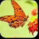 Butterfly Wallpapers by LunaDev