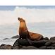 the Galapagos Island quiz by Digitalshop