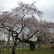 Japan:GiantWeepingCherry(JP245 by takemovies