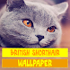 British Shorthair Cat Wallpaper by Tirtayasa Wallpaper