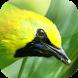 Kicau Burung Cucak Rante by KicauApp