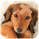Dachshund Wallpaper by Simple and Fun Apps