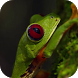 Jungle frog video wallpapers by AlexAlerion