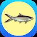 Sukses Budidaya Ikan Bandeng by Infopremia
