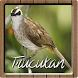 Kicau Master Burung Trucukan by Anggit G