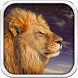 Wild Lion Live Wallpaper HD by Cicmilic Soft