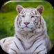 White Tiger Live Wallpaper by Live Wallpaper Free