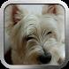 Post My Cute Pets by SinZSphere