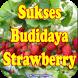 Cara budidaya Strawberry Di Polybag by Bushracreative