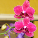 Orchids by Tito Victoriano