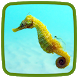 Seahorse Live Wallpaper by Live Animals APPS