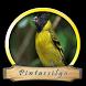 Canto Passaros de Pintassilgo by Silalahi App