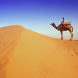 Camel Jigsaw Puzzles by kapustos