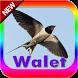 Suara pemanggil walet & inap by perimusicadev