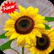 Sunflower by Seaweedsoft