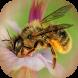 Bee Calculator