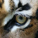 Animal Eyes 2 FREE by Appa Apps