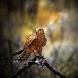 Birds of prey by Radu Savutiu