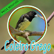 Cantos Da Coleiro Grego Complete by PerothaDev