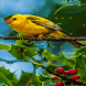 Red Cherries Bird LWP by Daksh Apps