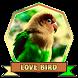 Masteran LoveBird Ngekek Los