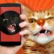 Cat Teaser: Sounds by Fresh & Mint