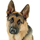 Породы собак by Tukituk