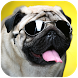 Pug Wallpaper by Simple and Fun Apps