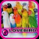 Master Lovebird Ngekek Offline by putradroid