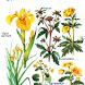 Определитель растений по фото by KitchenProStudio