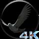 Eagle 3D Video LWP by Video Sfondi