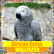 African Greys Birds Wallpaper by Tirtayasa Wallpaper