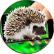 Hedgehog On Hands Screen Fun by KEYmobile