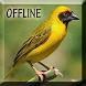 Master Suara Burung Manyar by Detarp Creative