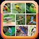 Canto dos pássaros Brasileiros Offline by Suporter App