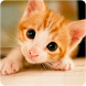 Kitten Wallpapers by Infinity