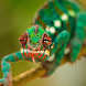 Reptiles and Frogs Wallpapers by artur
