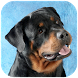 Rottweiler Wallpaper by Simple and Fun Apps