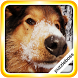 Jigsaw Puzzles: More Dogs by PuzzleBoss Inc