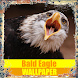 Bald Eagle Birds Wallpaper