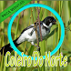 Coleiro Do Norte Complete by PerothaDev
