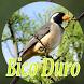 CANTO BICO DURO FÚRIA CRIADOR BATUQUEIRO by DosenDev