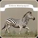 Zebra Wallpaper by wallPaper Inc.