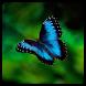 Butterflies brain game by Sergey Vasunenkov